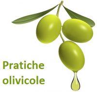 Pratiche olivicole